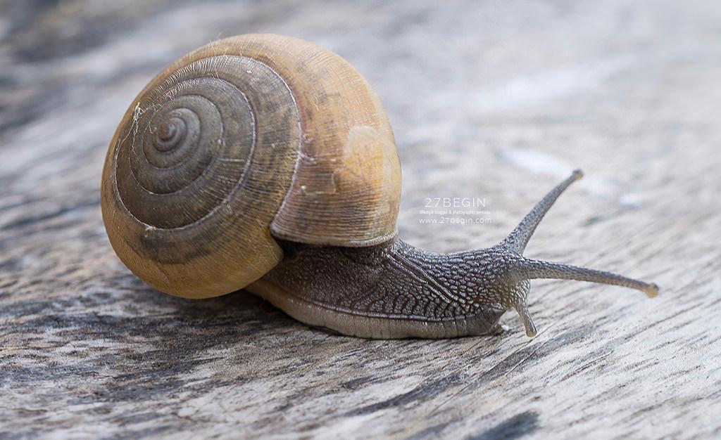 เมือกหอยทากไทย ก้าวไกลสู่สากล กับ Siam Snail Serum (สยาม สเนล เซรั่ม) | Siam Snail